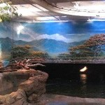 Adventure Aquarium hippo exhibit murals by Paul Barker