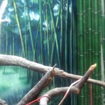 Denver-Zoo-fruit-bat-murals-matching-bamboo-Paul-Barker
