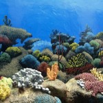 Jenkinsons-Aquarium-Boardwalk-tank-murals-Paul-Barker