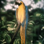 Blue-yellow-macaw-mural-Rainforest-Cafe-Paul-Barker