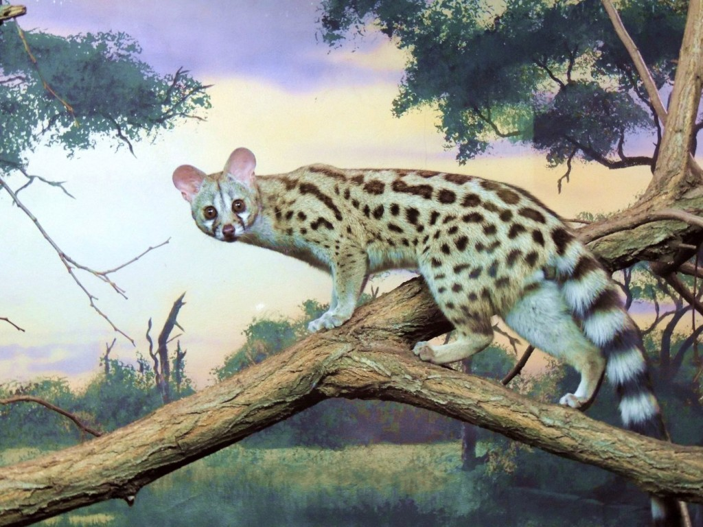 Erie-Zoo-genet-murals-Paul-Barker