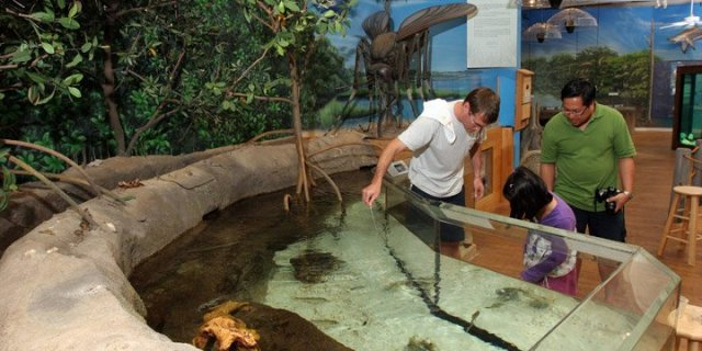 Marine-Science-Center-Ponce-Inlet-murals-Paul-Barker