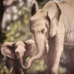 Mother-elephant-with-child-mural-by-Paul-Barker