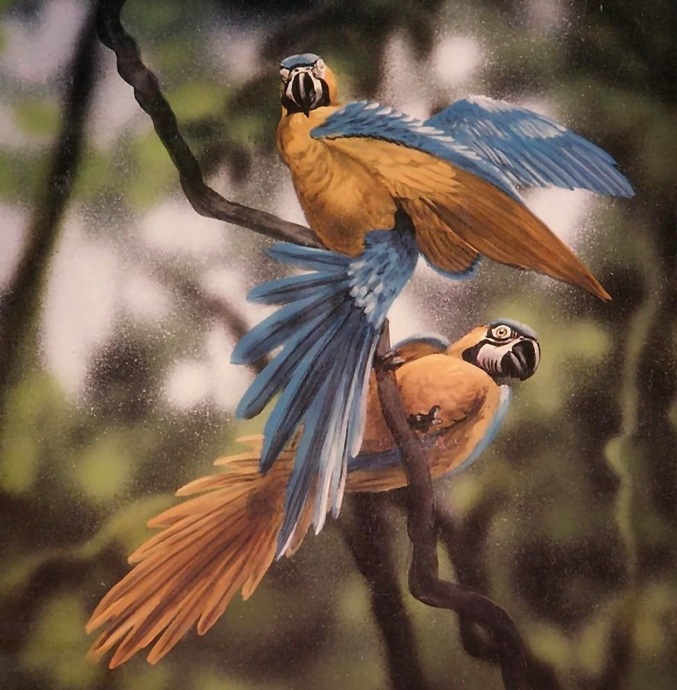 Mural-macaws-Paul-Barker-for-Rainforest-Cafe