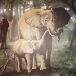 Mural-mother-elephant-and-child-Paul-Barker