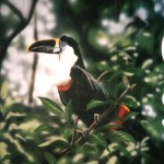 Mural-of-toucan-by-Paul-Barker-for-Rainforest-Cafe