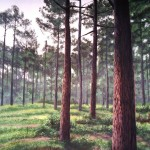 Tryon-Palace-pine-forest-mural8-Paul-Barker