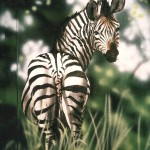 Zebra-mural-Rainforest-Cafe-Paul-Barker