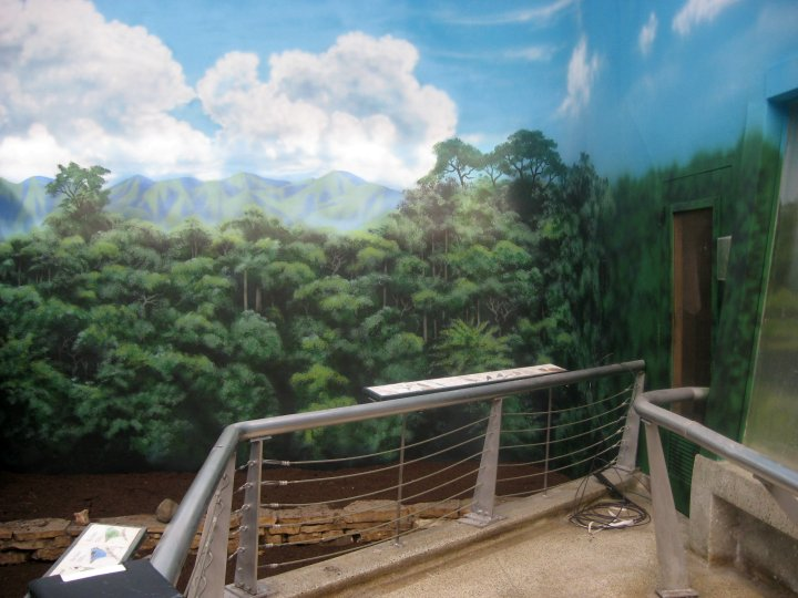 Brookfield-Zoo-Aviary-murals-by-Paul-Barker