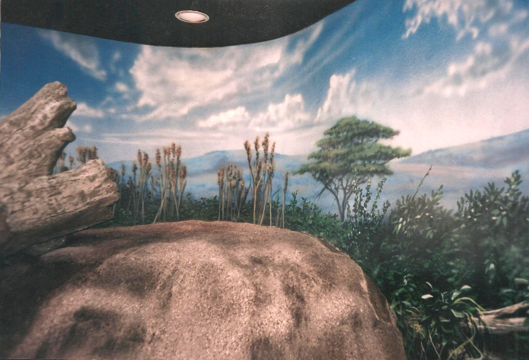Leopard-exhibit-murals-Erie-Zoo-by-Paul-Barker-Googleplex