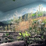 brookfield-zoo-tropic-world-murals-paul-barker-photo-kate-wallace