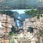 brookfield-zoo-tropic-world-murals-by-paul-barker-photo-kate-wallace