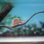 painting by Paul Barker of squirrel on branch in mural at Wissahickon Environmental Center in Philadelphia