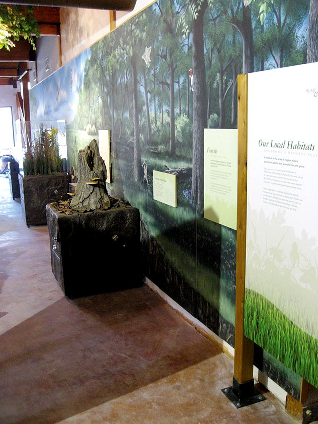 Forest mural at Oxley Nature Center in Tulsa Oklahoma by Paul Barker for Taylor Studios Rantoul Illinois
