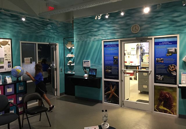 Smithsonian-Marine-Station-Discovery-Room-murals-by-Paul-Barker-of-Googleplex