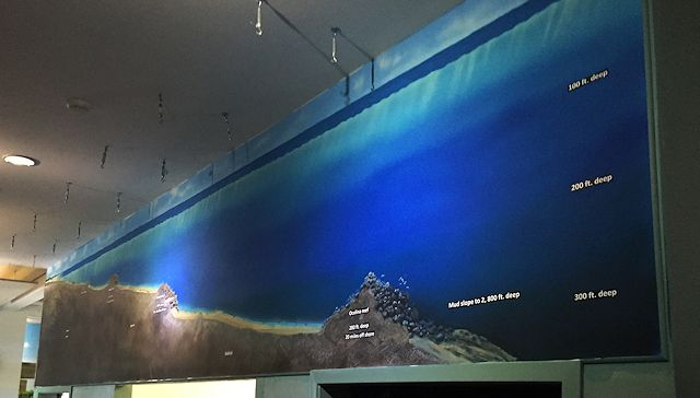 Smithsonian-Marine-Station-Oculina-Reef-murals-by-Paul-Barker